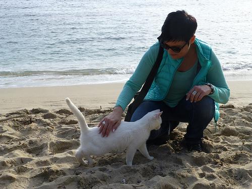 Ruth-weiße-Katze