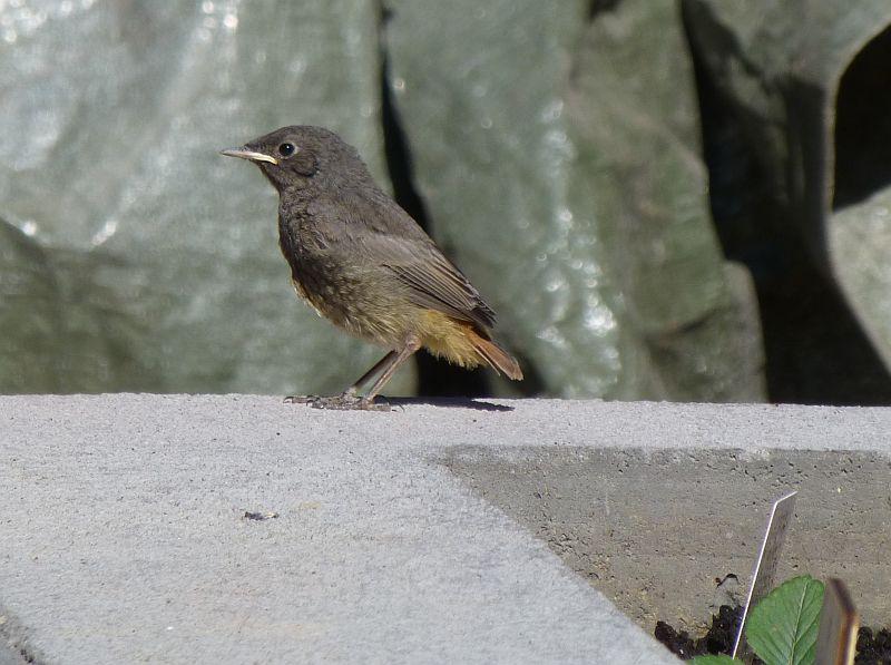 Vögel-3