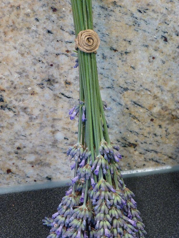 Lavendelernte2014-7