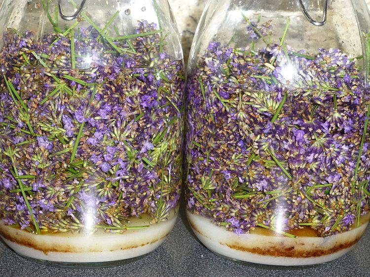 Lavendelernte2014-Likör-2