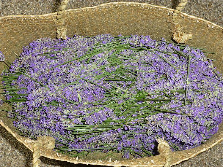 Lavendelernte2014
