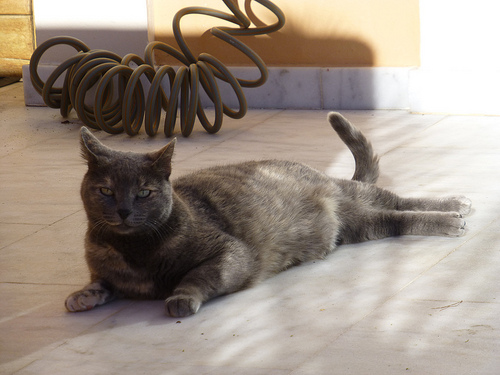 Katze-Terasse2