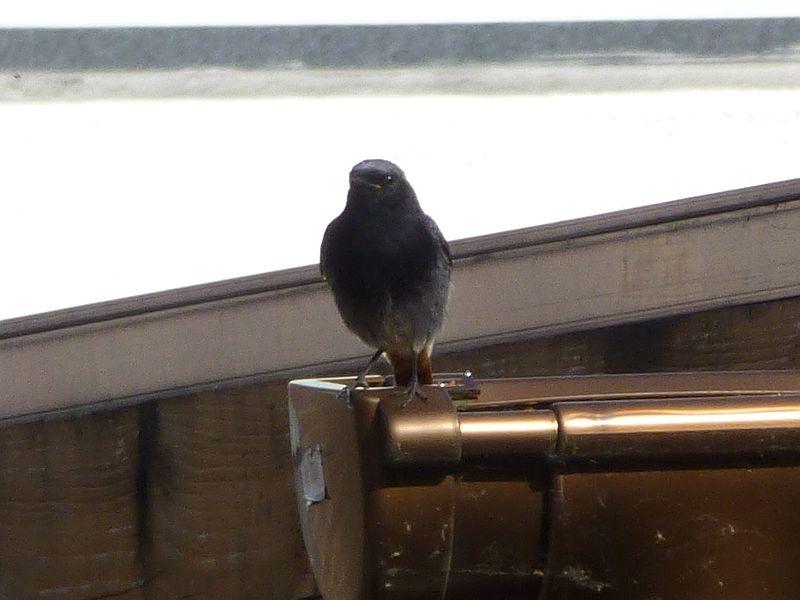 Vögel-1