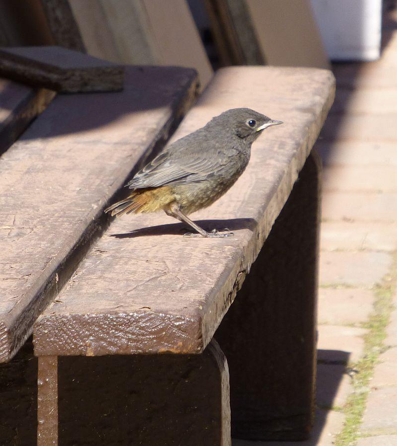 Vögel-2