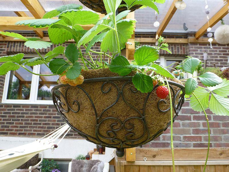 Erdbeeren-Salat-2