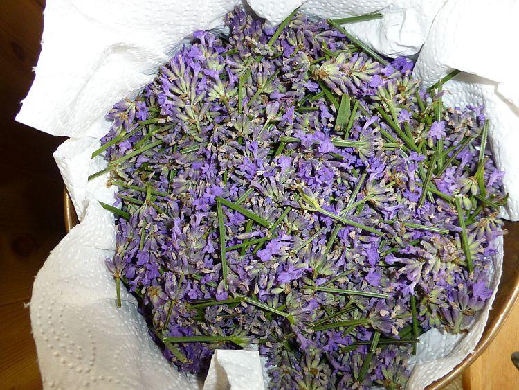 Lavendelernte2014-3